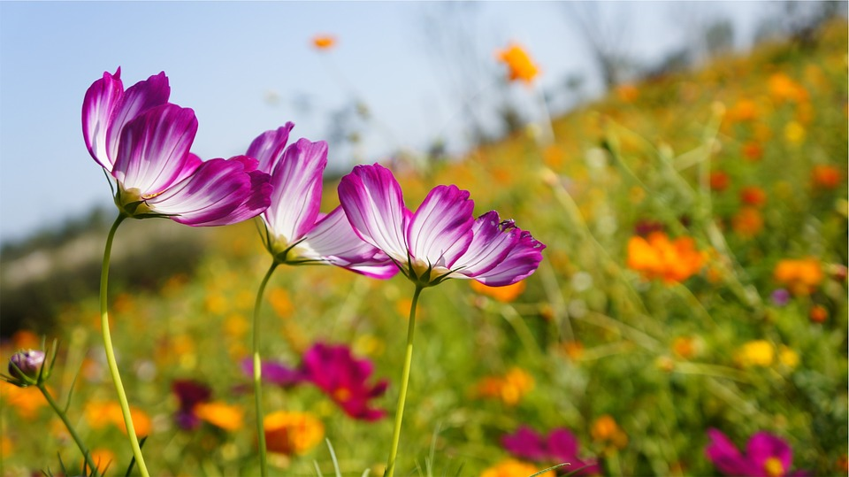 flowers-698678_960_720