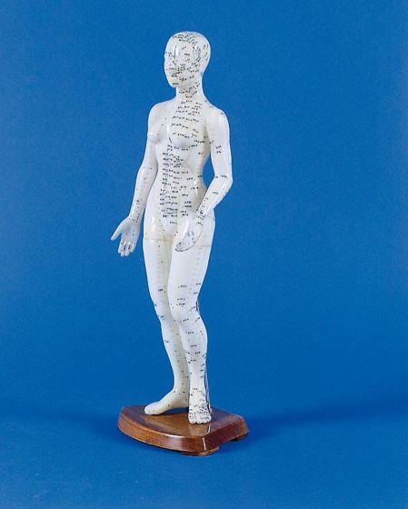 Modèle féminin d'acupuncture 2048 Erler Zimmer