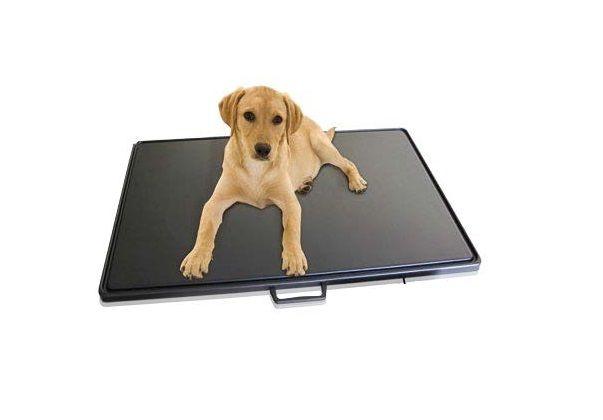 Pèse-animaux Soehnle 7859 plateforme avec chanfrein