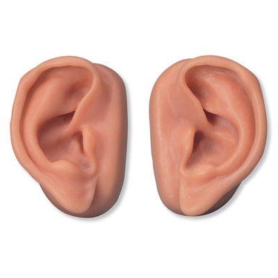 Kit de 10 paires d'oreilles pour l'acupuncture N16 3B Scientific