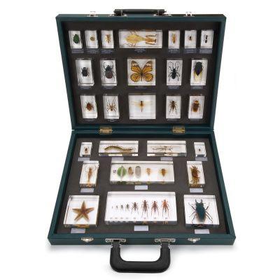 Mallette échantillons de 27 invertébrés W59550 3B Scientific