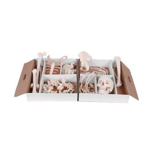 Demi-squelette, démonté A04/1 - côté gauche