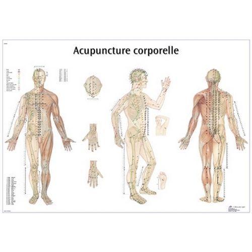 Planche anatomique d'acupuncture corporelle VR2820L