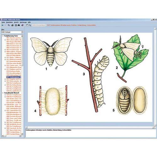 CD-ROM Le monde des papillons 3B Scientific W13537