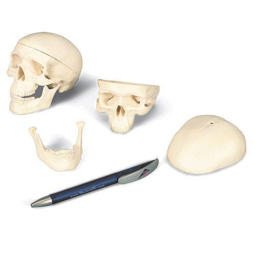 Crâne miniature en 3 parties A18/15