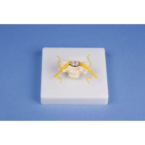 Vertèbre cervicale avec coupe de moelle épinière 4067 Erler Zimmer