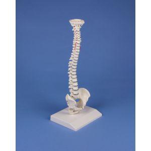 Colonne vertébrale miniature élastique 4001 Erler Zimmer