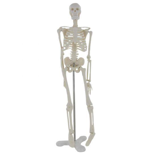 Mini squelette anatomique humain 45cm Mediprem