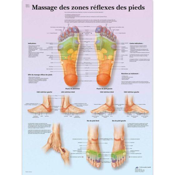 Planche anatomique Massage des zones réflexes des pieds VR2810L
