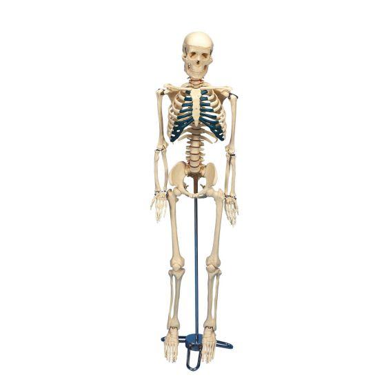 Squelette pour le bureau W33000