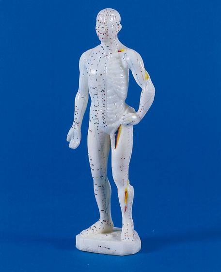 Mini modèle masculin d'acupuncture 2044 Erler Zimmer