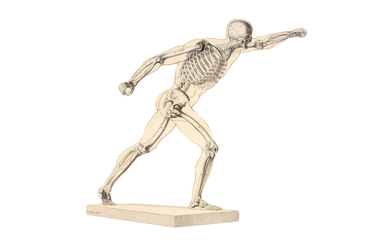squelette anatomique top 5 des meilleurs squelettes en 2018. Black Bedroom Furniture Sets. Home Design Ideas